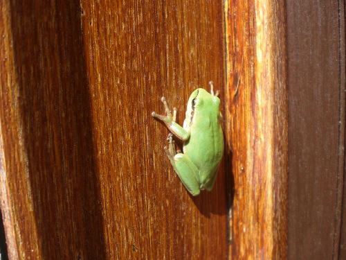 Froggy from the bathroom
